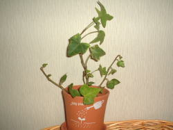 室内の植物