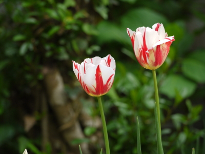 五月の花♪