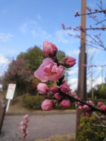 何の花?^^;