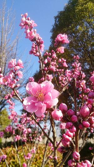 春だね~!^^