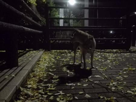 夜散歩!^^