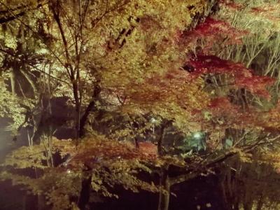 宝福寺の紅葉ライトアップ!