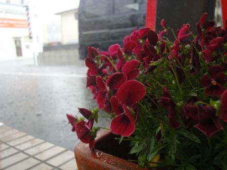 春の嵐 炸裂!^^;