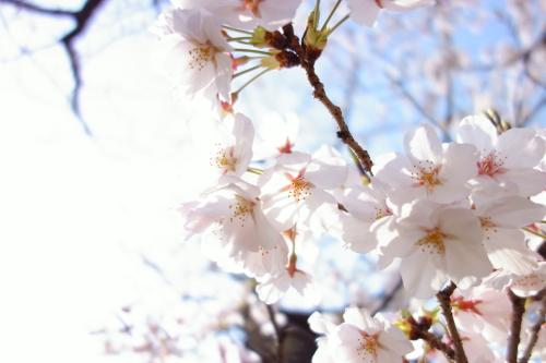 マスカット球場の春!