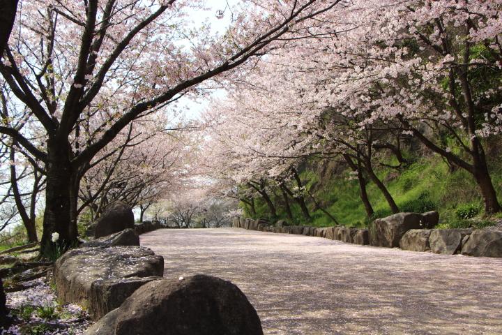 亀島山公園 初登頂!^^;