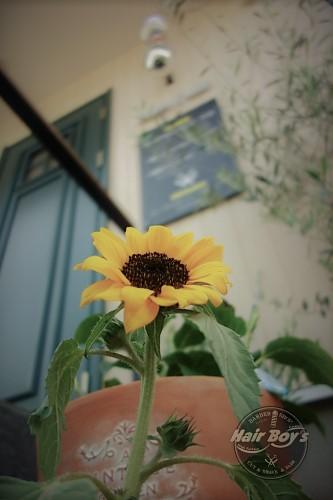 花の植え替え!